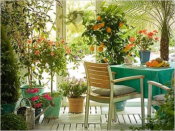 Комнатные растения которые любят солнце — Цветок домашний